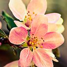 Vintage Blossom by Alison Hill