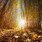 Fall Begins by Bob Larson