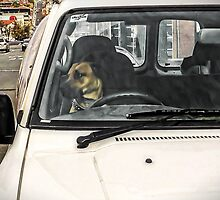Doggone It! Always check the rear vision mirror before changing lanes by TonyCrehan