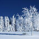 The Snow Paradise Fir Trees by Imi Koetz