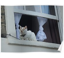 I'm a town cat, me Poster