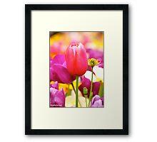 Floriade 2013 Framed Print