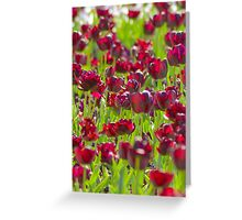 Tulips in Burgundy Greeting Card