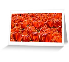 Floriade in Red Greeting Card