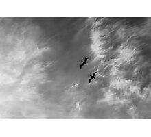 Dos Pelicanos Photographic Print