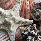 Pretty Shells by Paul Sturdivant