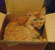 Cat in a Box by Vivian Eagleson