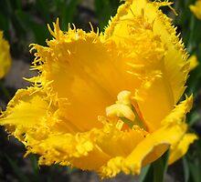 Tulip Macro # 5 by Vitta