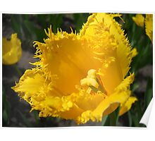 Tulip Macro # 5 Poster