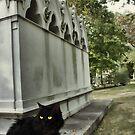 BLACK CAT by Spiritinme