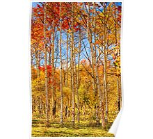 Aspen Fall Foliage Portrait Red Gold and Yellow  Poster