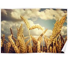 Crops Poster