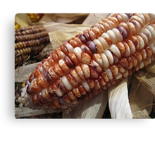 Turning the Fall Corn-er Canvas Print