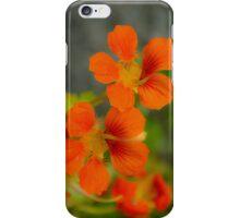 Dayglo Orange Nasturtiums iPhone Case/Skin