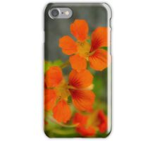 Dayglo Orange Nasturtiums iPhone Case/Skin