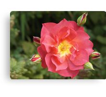 Rose and Buds Canvas Print