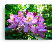 Azalea fun Canvas Print