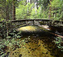 Passage over the Merced River - Yosemite by Barbara Burkhardt