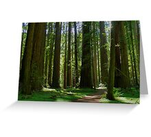 Humboldt Redwoods State Park California Greeting Card