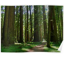 Humboldt Redwoods State Park California Poster