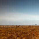 Icelandic Landscape by Nicholas Jermy