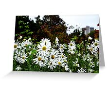Daisies In London - Autumn  Greeting Card