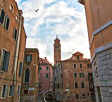 Seagull Over Venice by Adrian Alford Photography