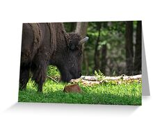 Bison and New Born Calf Greeting Card