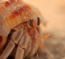 Hermit Crab on Cable Beach, Broome by Julia Rau  Photography