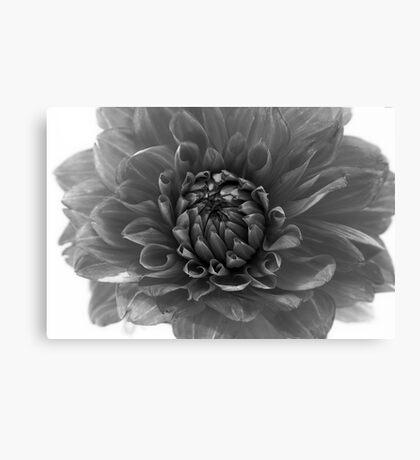 dahlia - monochrome Canvas Print