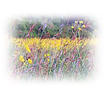 Butter Cup Meadow Photographic Print