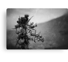 The Thistle Canvas Print
