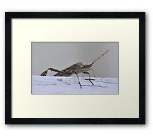Invasion of the Stink Bug Framed Print