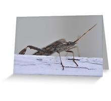 Invasion of the Stink Bug Greeting Card