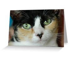 Gerdy the cat Greeting Card