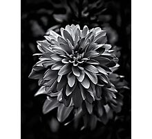 Backyard Flowers In Black And White 15 Photographic Print