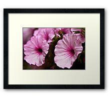 Pedals of Pink Framed Print