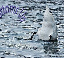 Bottoms Up Swan by Avril Harris