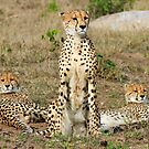 A Cheetah Family by jozi1
