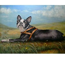 Pixie on the Prairie Photographic Print