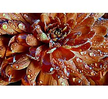 Mum's The Word: The Word is Russet Photographic Print