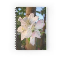 Beautiful Apple Blossom Cluster Spiral Notebook