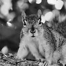 Mono Squirrelly by Keala