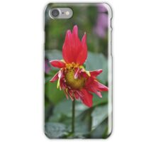 Dahlia Flowering iPhone Case/Skin