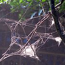 what a tangled web ... by Zefira