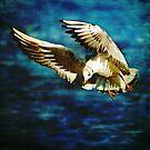 Freedom of Flight by Liz Scott