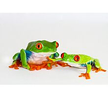Red Eye Tree Frogs Photographic Print
