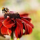 The Bees Knees by Liz Scott