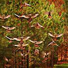 Wild Turkeys by Ginger  Barritt