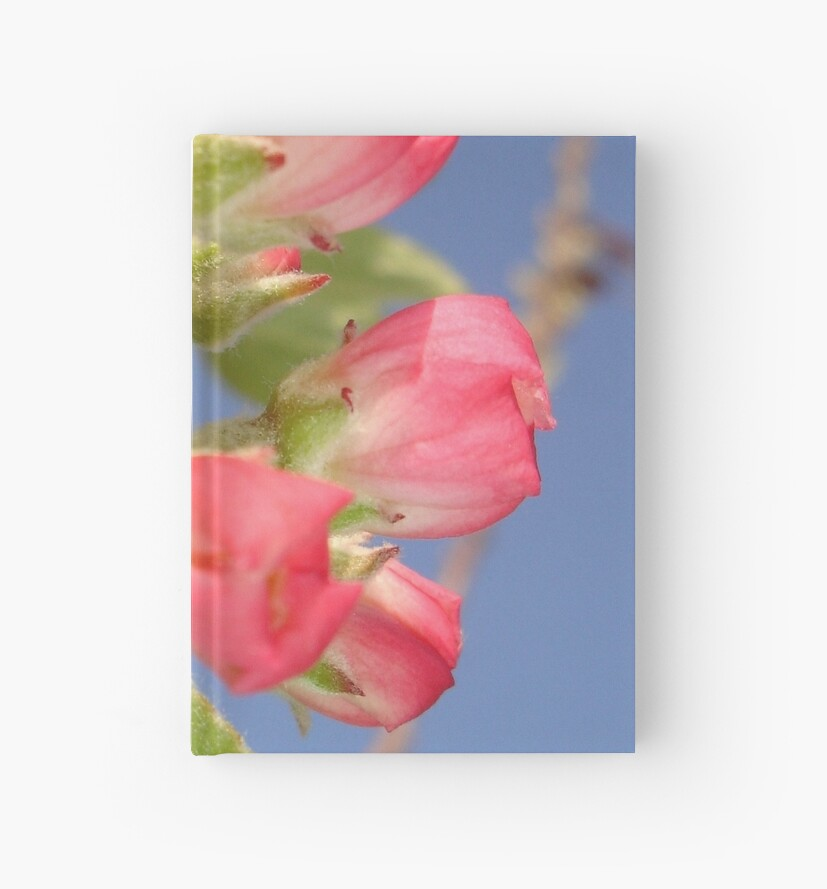 Spring Apple Blossom Flowers  by taiche